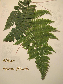 New-Fern-Park logo